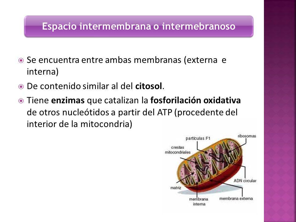 Espacio intermembrana o intermebranoso