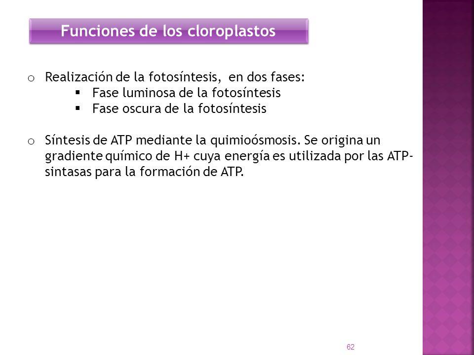 Funciones de los cloroplastos