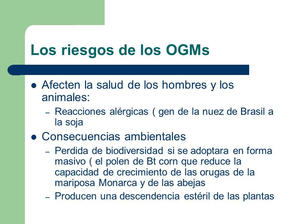 Los riesgos de los OGMsAfecten la salud de los hombres y los animales: Reacciones alérgicas ( gen de la nuez de Brasil a la soja.