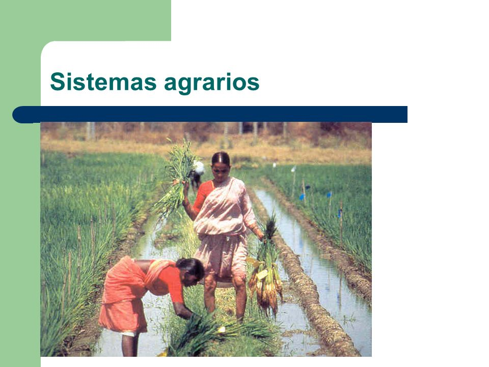 Sistemas agrarios