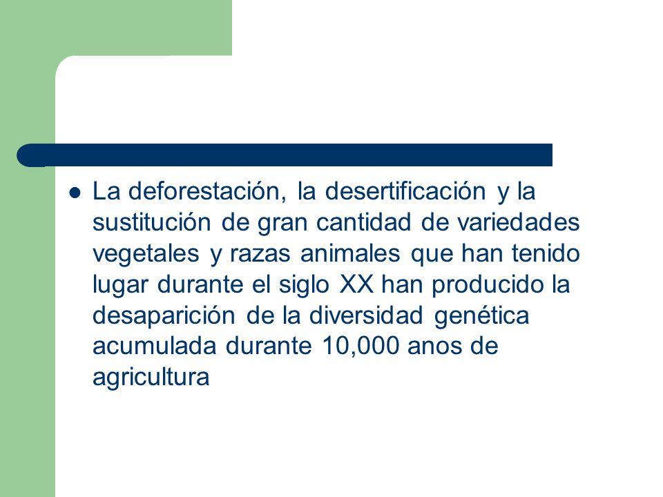 La deforestación, la desertificación y la sustitución de gran cantidad de variedades vegetales y razas animales que han tenido lugar durante el siglo XX han producido la desaparición de la diversidad genética acumulada durante 10,000 anos de agricultura