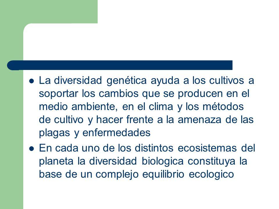 La diversidad genética ayuda a los cultivos a soportar los cambios que se producen en el medio ambiente, en el clima y los métodos de cultivo y hacer frente a la amenaza de las plagas y enfermedades