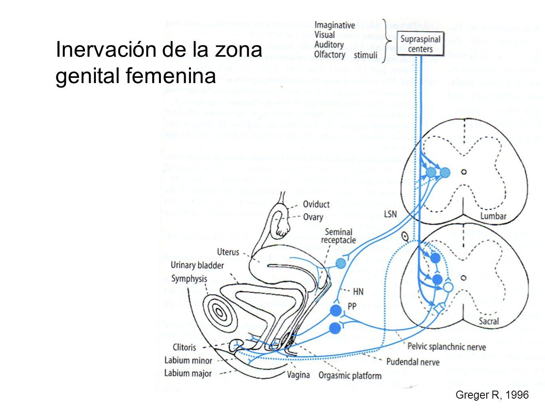 Inervación de la zona genital femenina