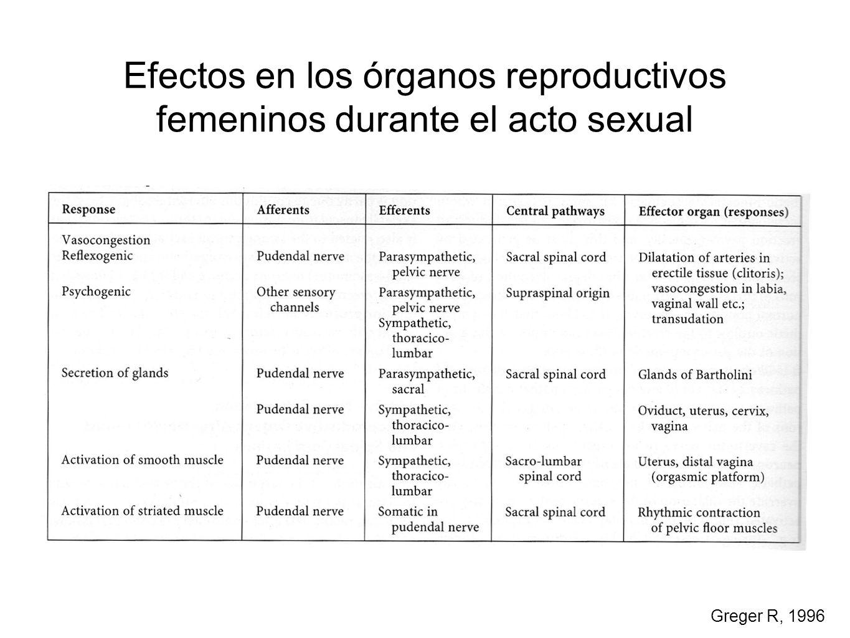 Efectos en los órganos reproductivos femeninos durante el acto sexual