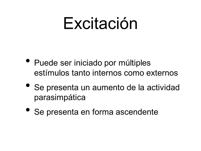 Excitación Puede ser iniciado por múltiples estímulos tanto internos como externos. Se presenta un aumento de la actividad parasimpática.
