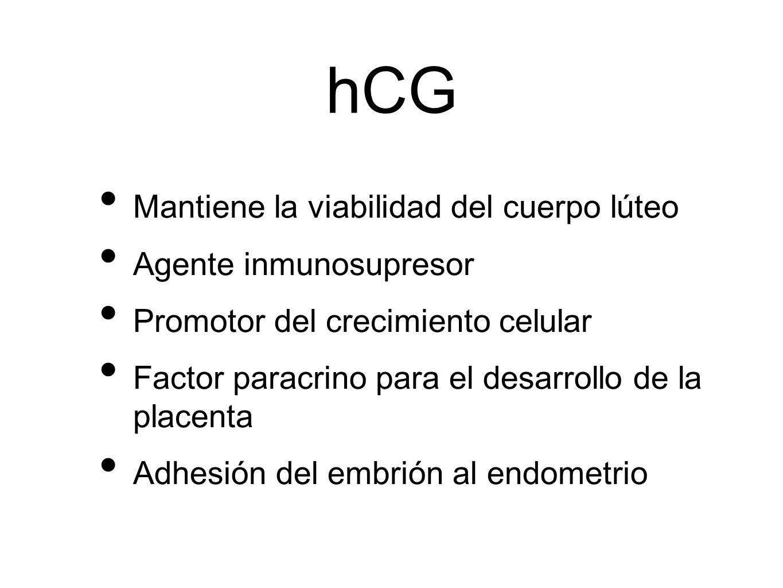 hCG Mantiene la viabilidad del cuerpo lúteo Agente inmunosupresor