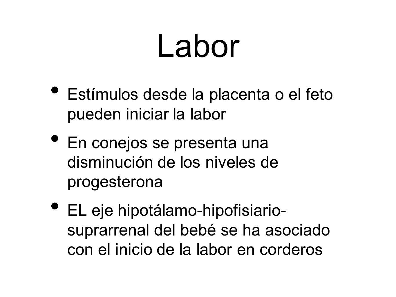 Labor Estímulos desde la placenta o el feto pueden iniciar la labor
