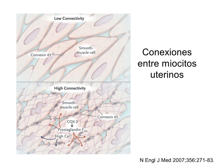 Conexiones entre miocitos uterinos