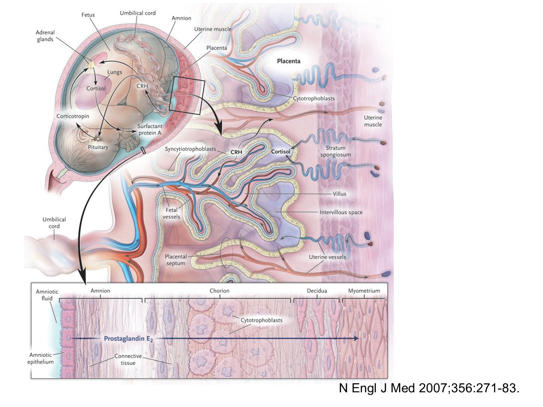 N Engl J Med 2007;356:271-83.