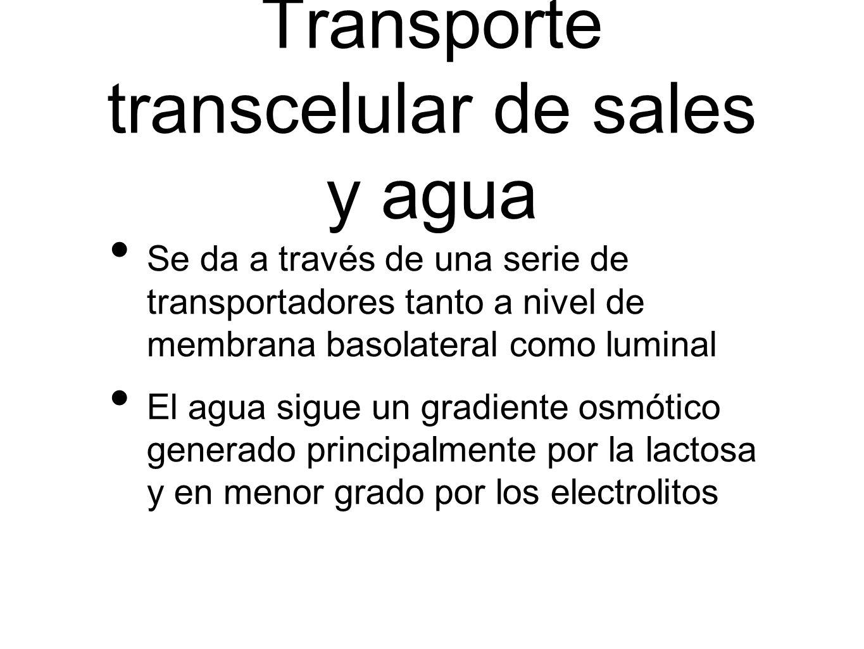 Transporte transcelular de sales y agua