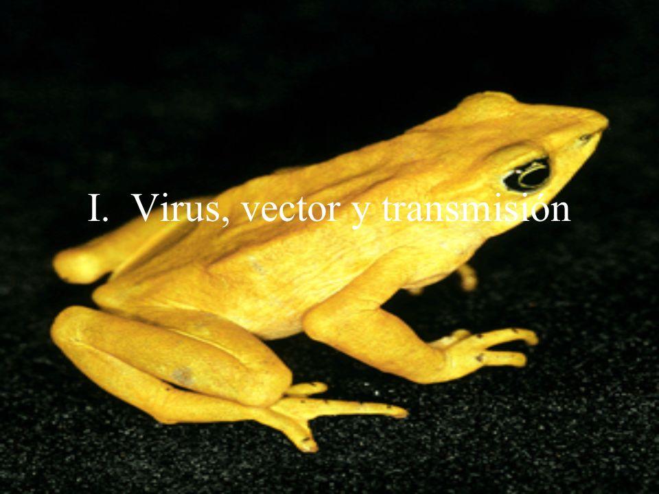 I. Virus, vector y transmisión