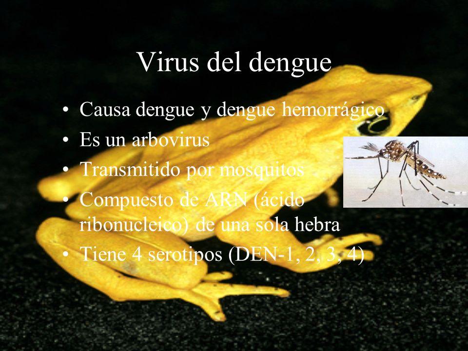 Virus del dengue Causa dengue y dengue hemorrágico Es un arbovirus