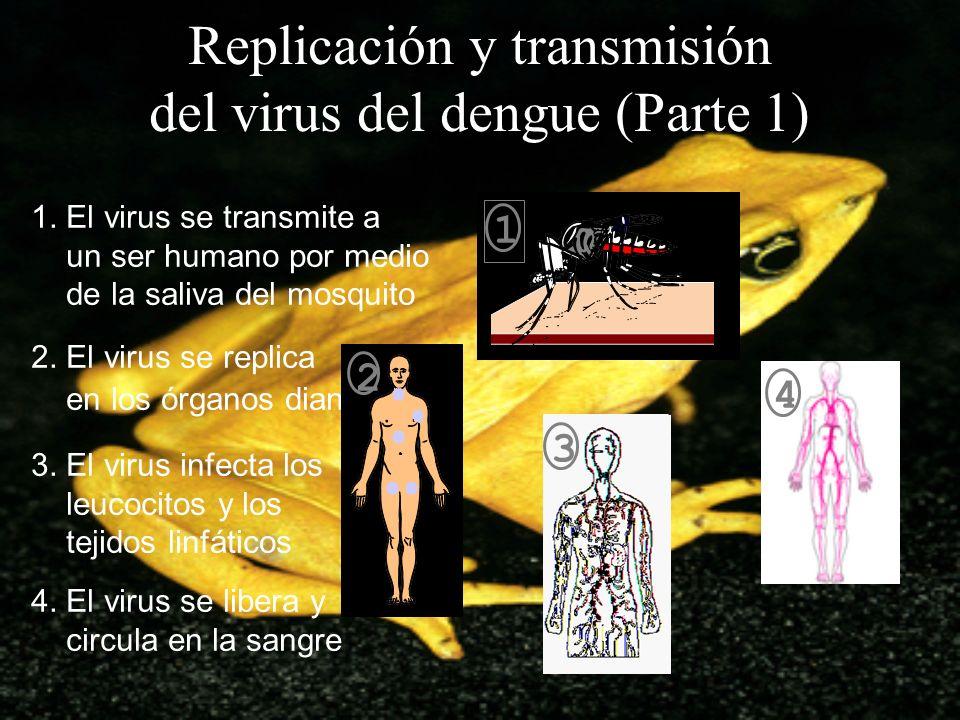 Replicación y transmisión del virus del dengue (Parte 1)
