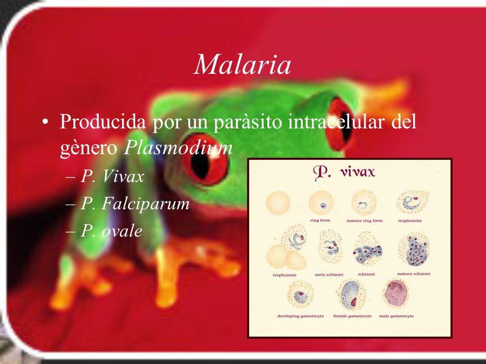 Malaria Producida por un paràsito intracelular del gènero Plasmodium