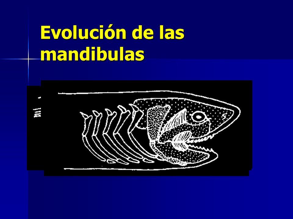 Evolución de las mandibulas