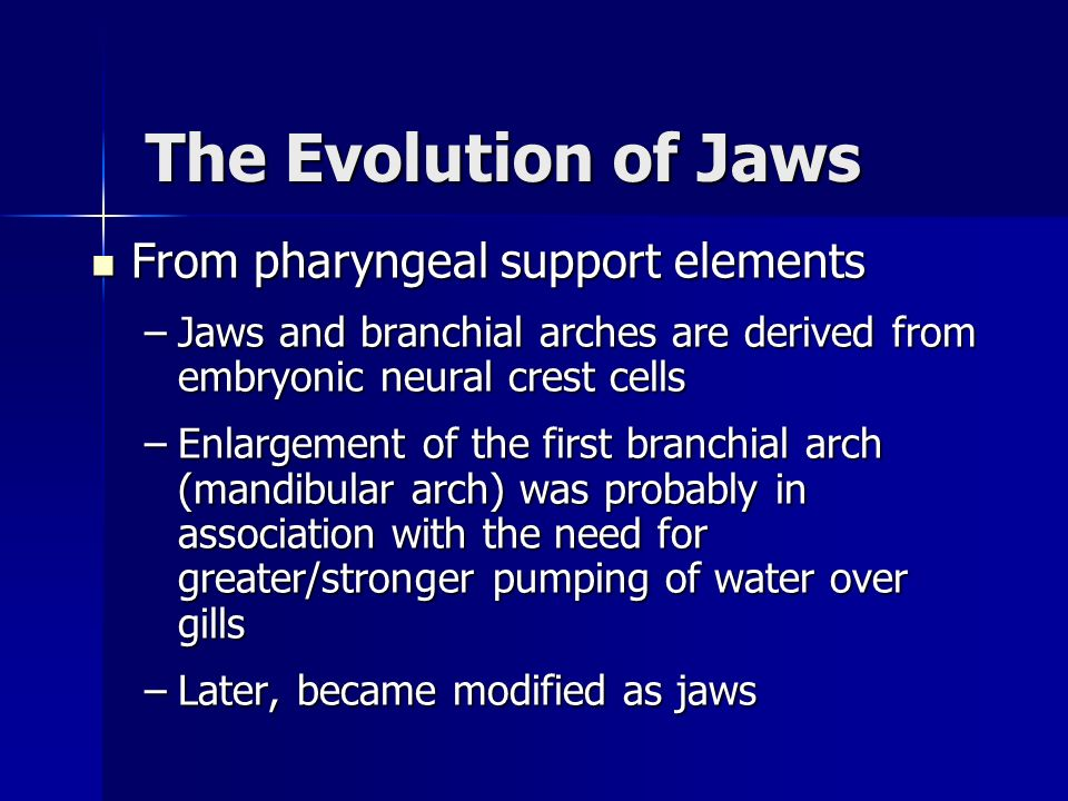 The Evolution of Jaws From pharyngeal support elements