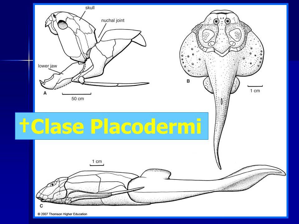 †Clase Placodermi
