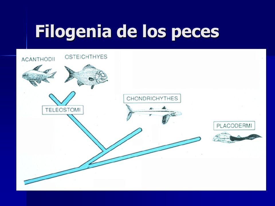 Filogenia de los peces