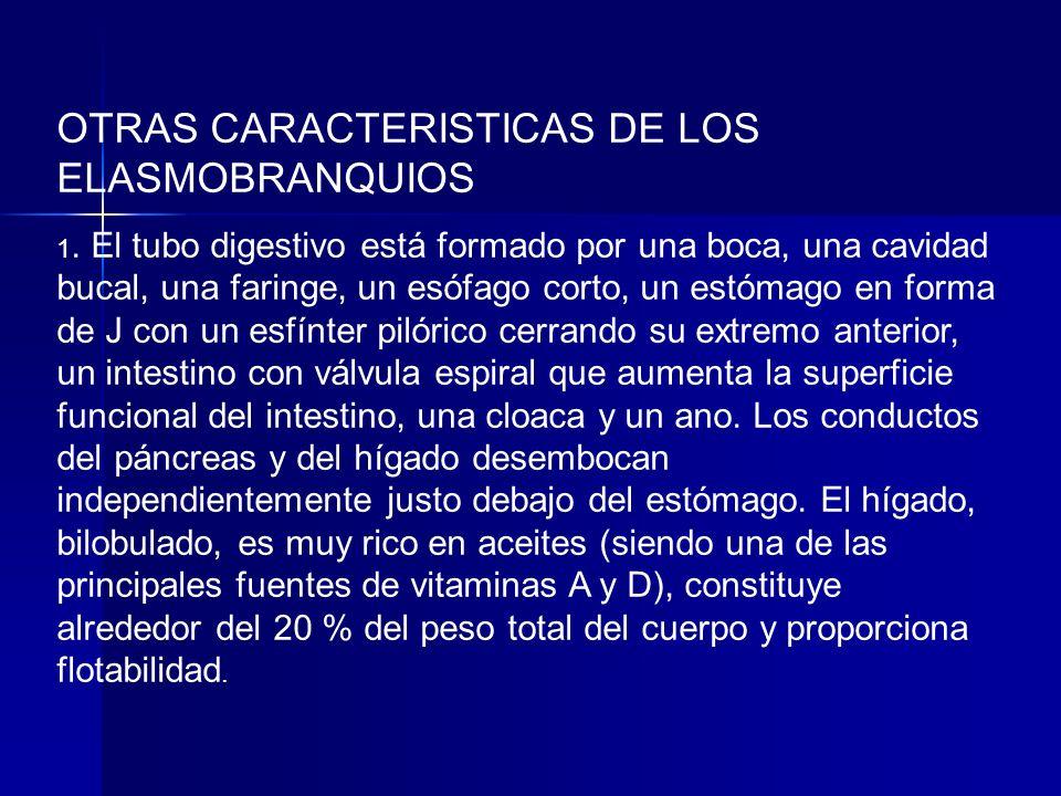 OTRAS CARACTERISTICAS DE LOS ELASMOBRANQUIOS