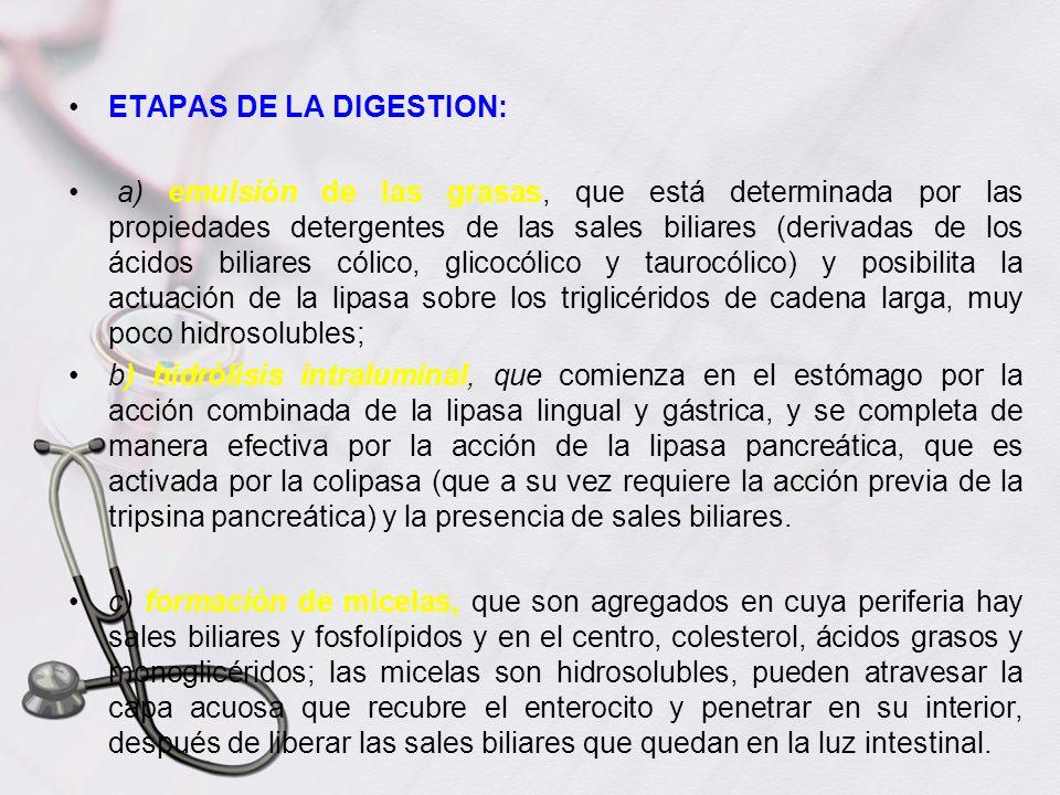 ETAPAS DE LA DIGESTION: