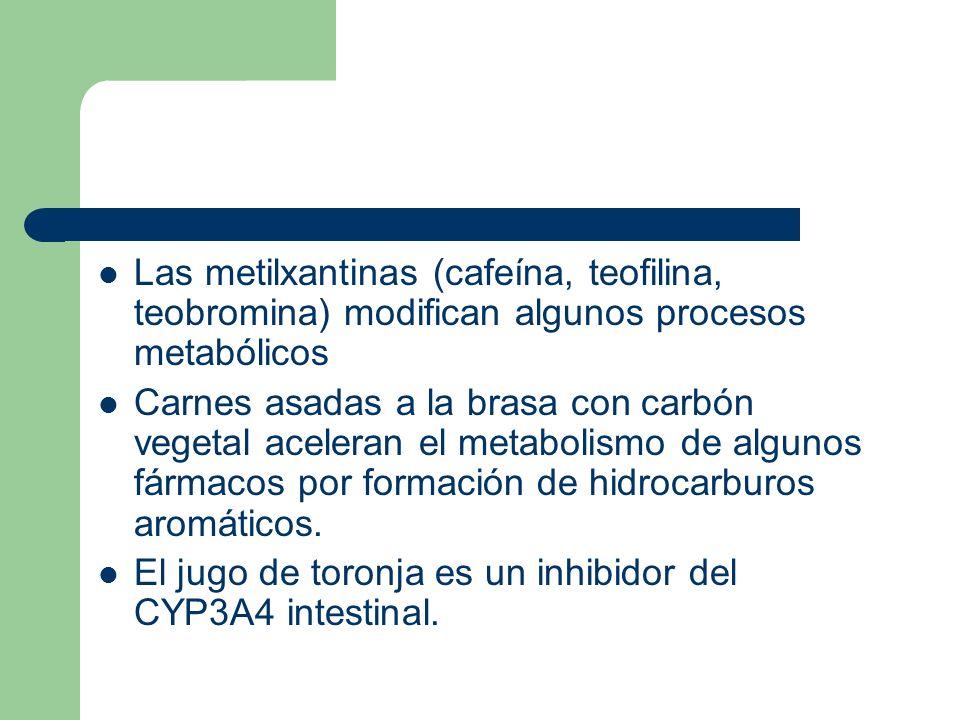 Las metilxantinas (cafeína, teofilina, teobromina) modifican algunos procesos metabólicos