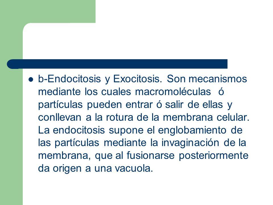 b-Endocitosis y Exocitosis