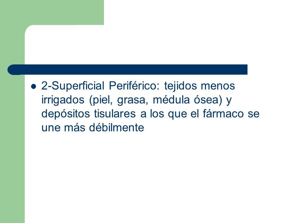2-Superficial Periférico: tejidos menos irrigados (piel, grasa, médula ósea) y depósitos tisulares a los que el fármaco se une más débilmente