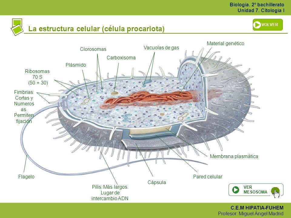 Celula Procariota Material Genetico De Los Virus