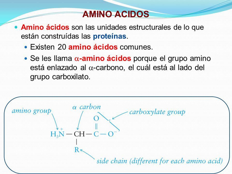 AMINO ACIDOS Existen 20 amino ácidos comunes.
