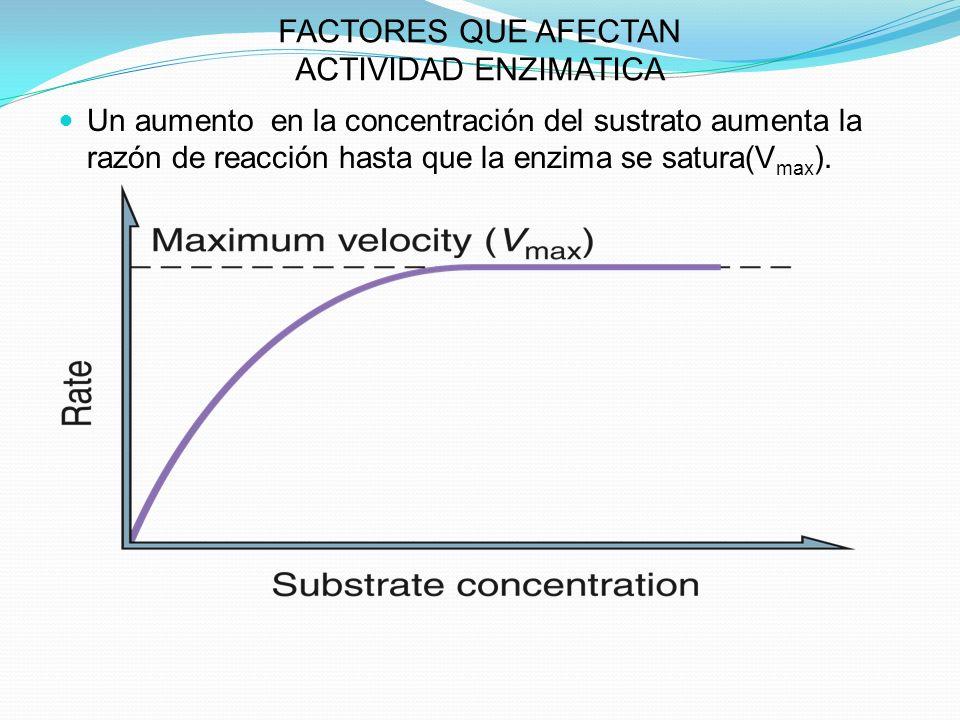 FACTORES QUE AFECTAN ACTIVIDAD ENZIMATICA