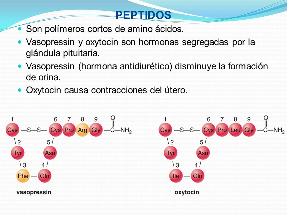 PEPTIDOS Son polímeros cortos de amino ácidos.