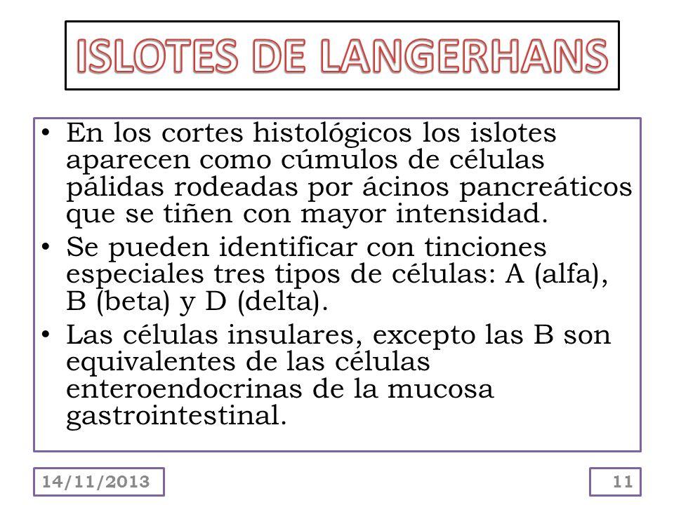 ISLOTES DE LANGERHANS