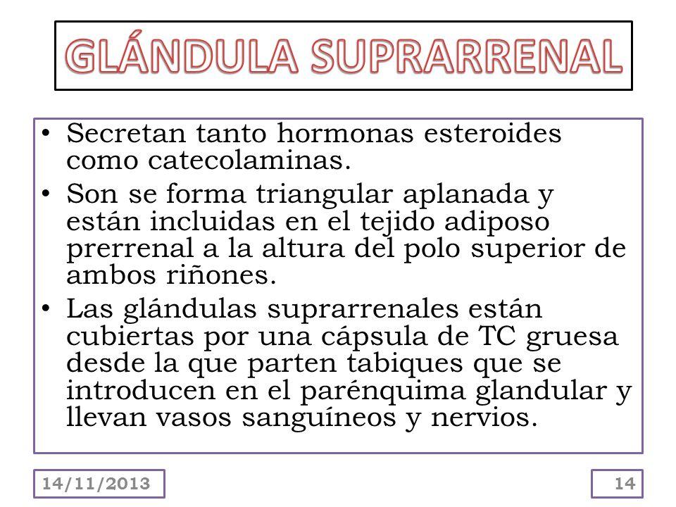 GLÁNDULA SUPRARRENALSecretan tanto hormonas esteroides como catecolaminas.