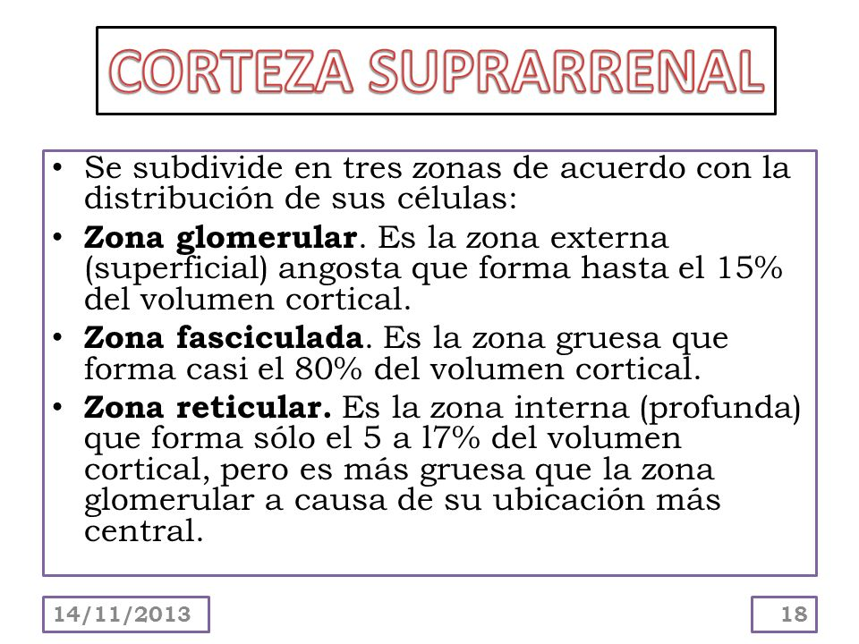CORTEZA SUPRARRENAL Se subdivide en tres zonas de acuerdo con la distribución de sus células: