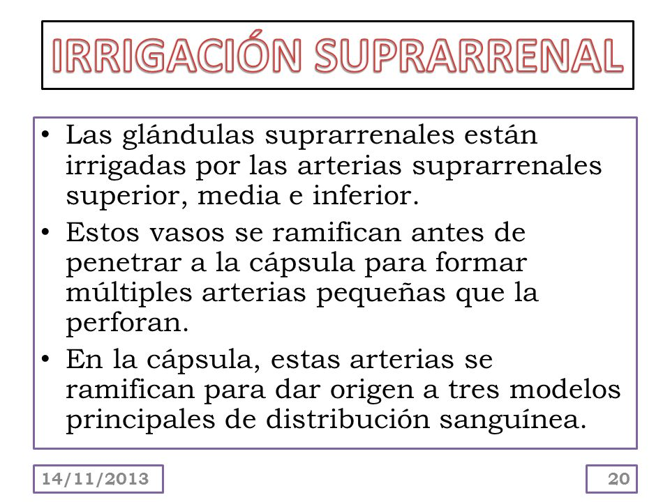 IRRIGACIÓN SUPRARRENAL