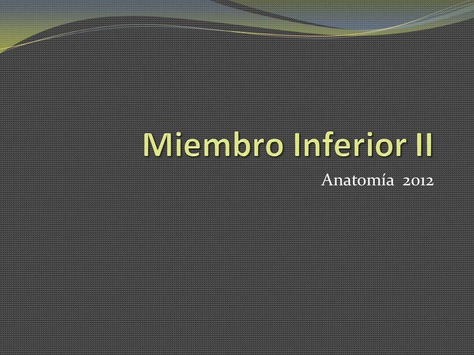 Miembro Inferior II Anatomía 2012