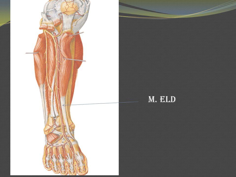 M. ELD