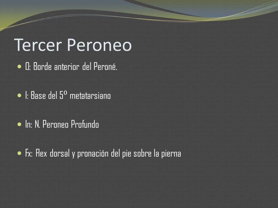 Tercer Peroneo O: Borde anterior del Peroné.