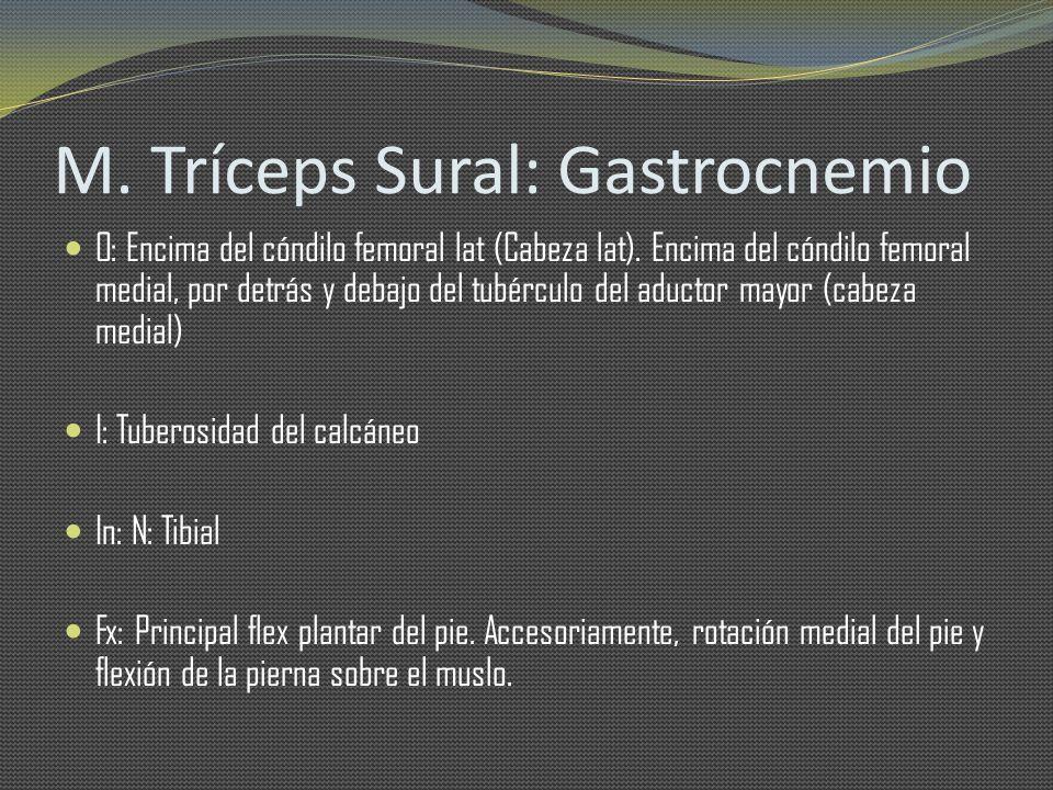 M. Tríceps Sural: Gastrocnemio