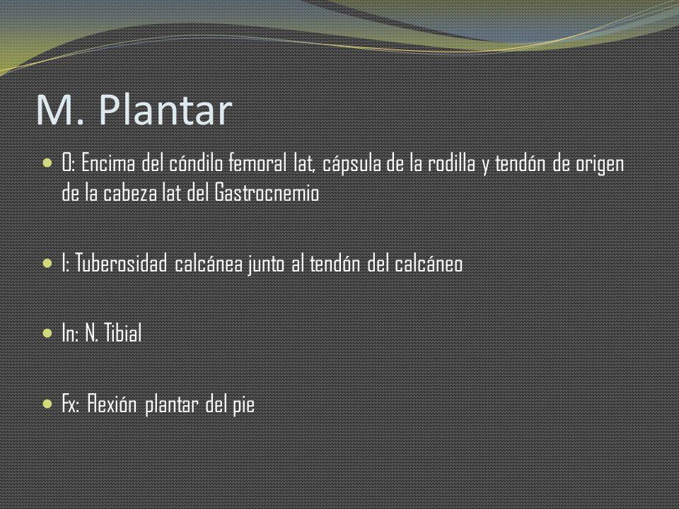 M. Plantar O: Encima del cóndilo femoral lat, cápsula de la rodilla y tendón de origen de la cabeza lat del Gastrocnemio.