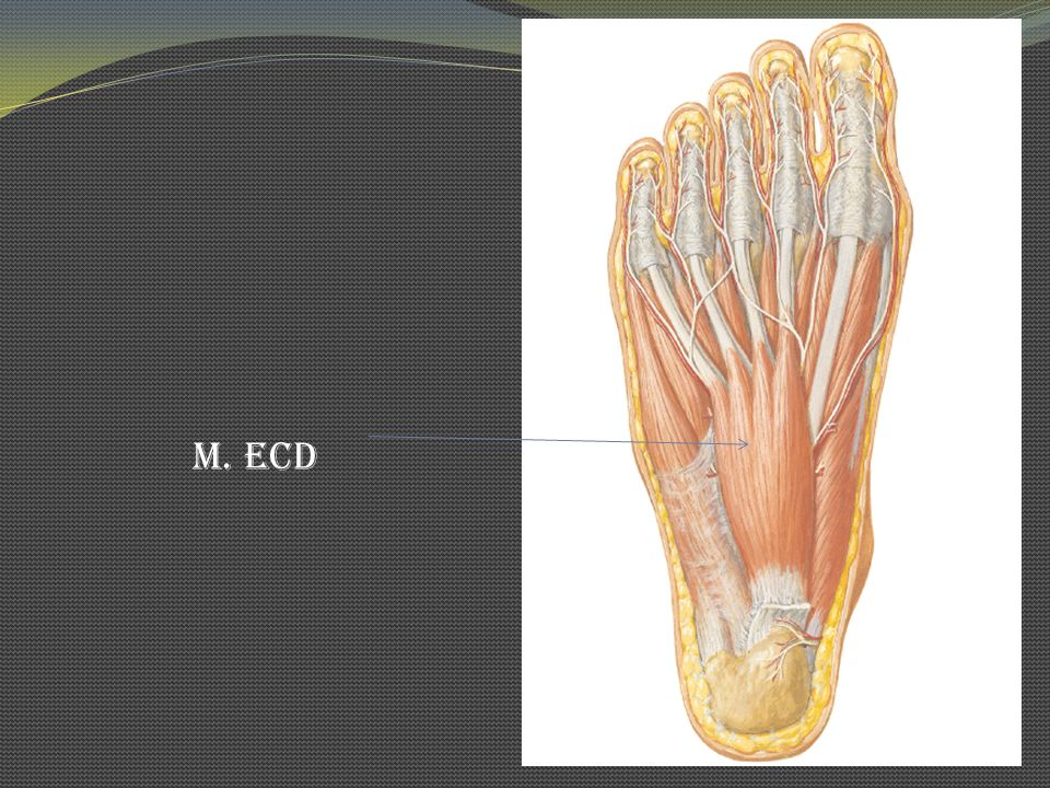 M. ECD
