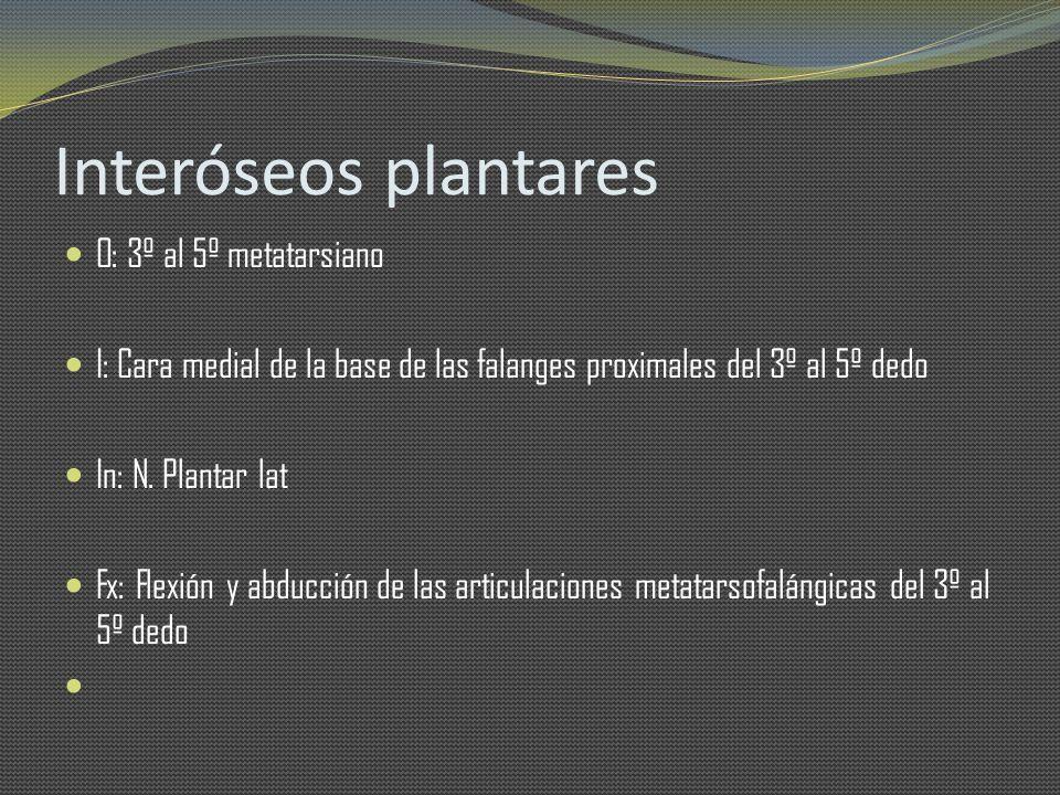 Interóseos plantares O: 3º al 5º metatarsiano