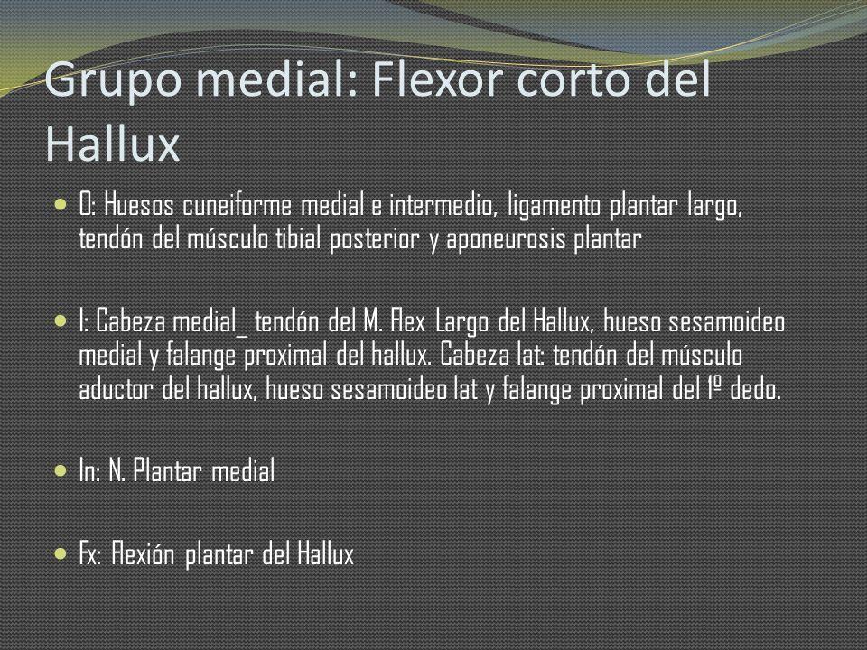 Grupo medial: Flexor corto del Hallux