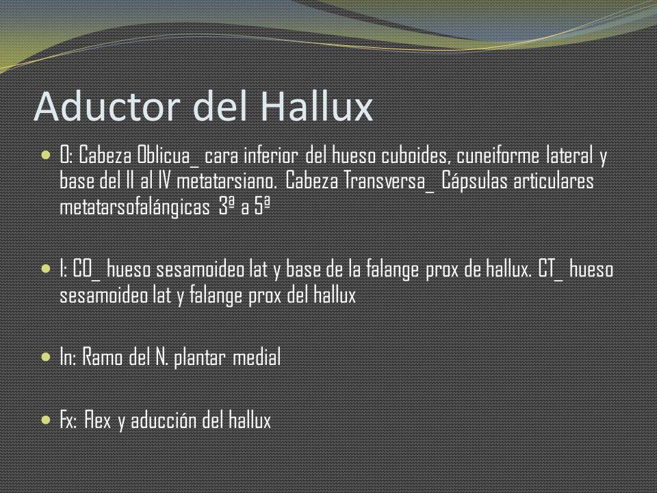 Aductor del Hallux