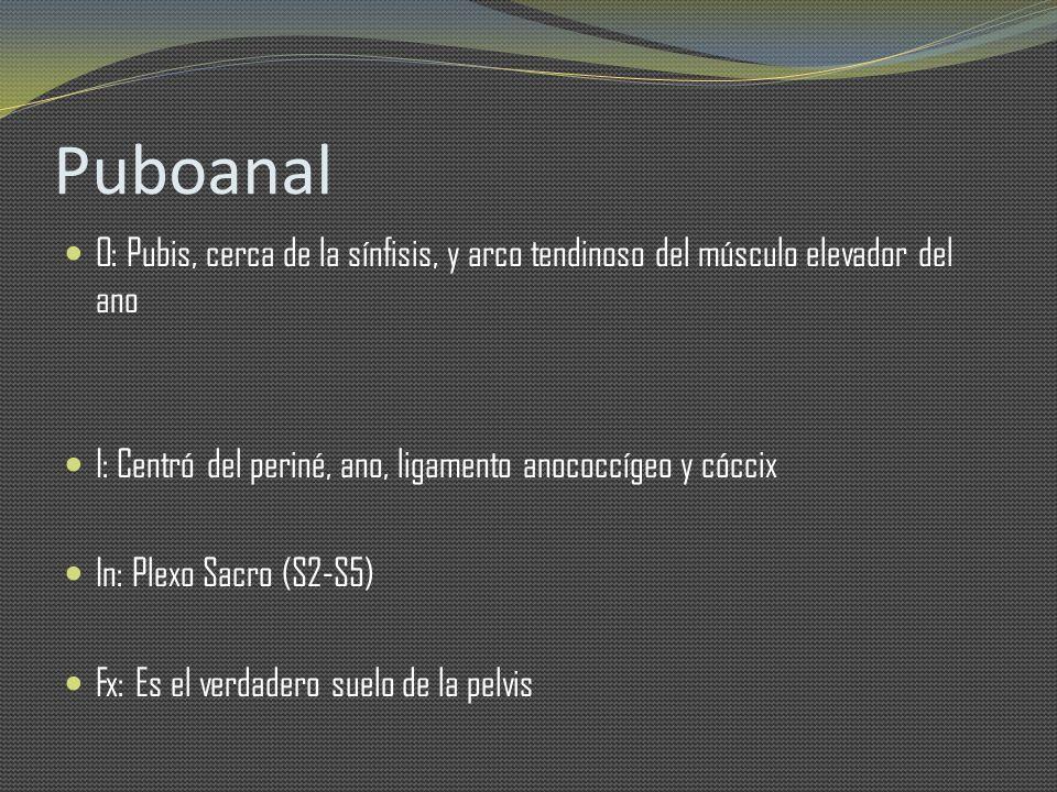 Puboanal O: Pubis, cerca de la sínfisis, y arco tendinoso del músculo elevador del ano. I: Centró del periné, ano, ligamento anococcígeo y cóccix.