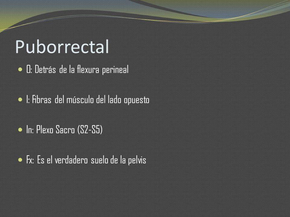 Puborrectal O: Detrás de la flexura perineal