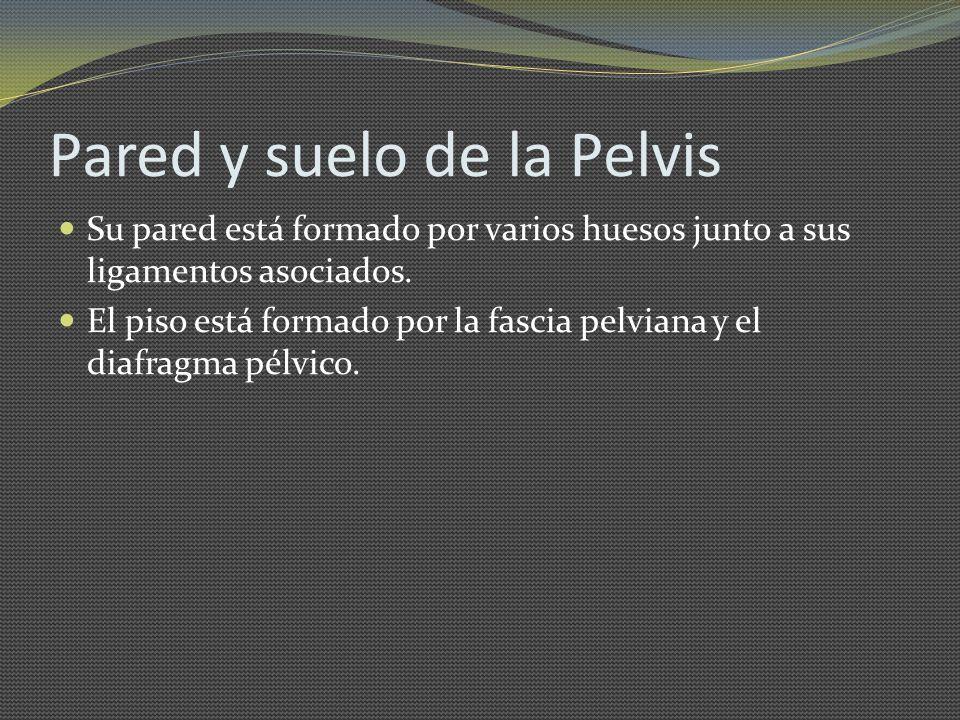 Pared y suelo de la Pelvis
