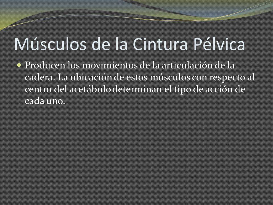 Músculos de la Cintura Pélvica