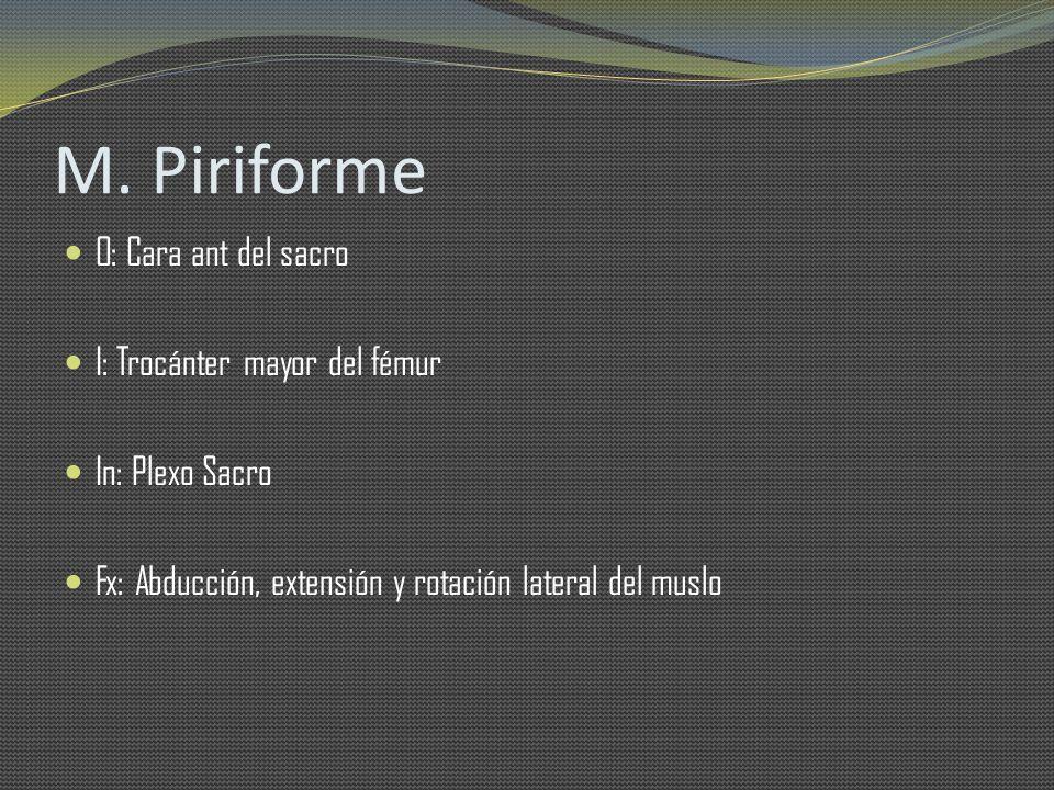 M. Piriforme O: Cara ant del sacro I: Trocánter mayor del fémur