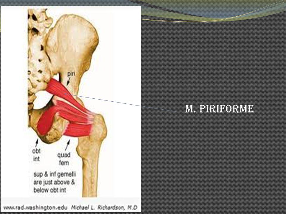M. Piriforme